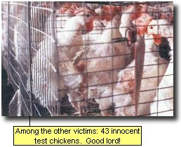 Among the other victims: 43 innocent test chickens.  Good lord!