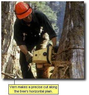 Vern makes a precise cut along the tree's horizontal plain.